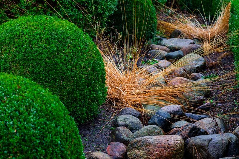 grass and shrubs growing among stones
