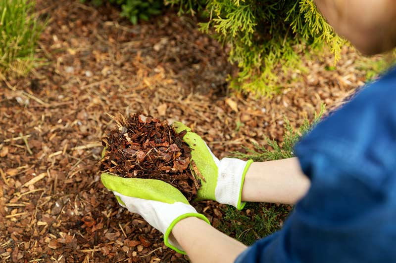 mulch being laid by hand