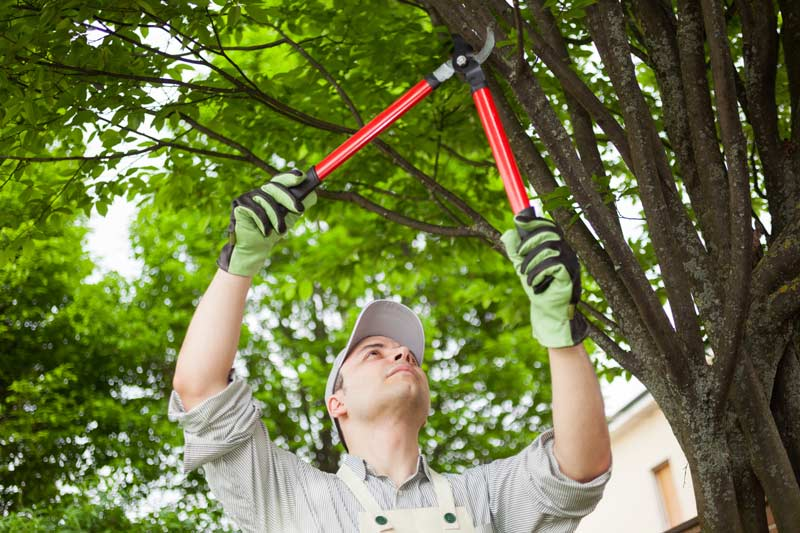 a professional trimming tree branches