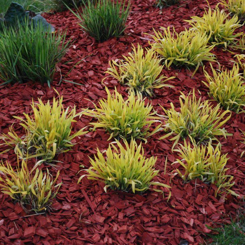 mulch in landscaping